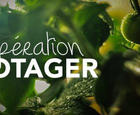 operation-potager